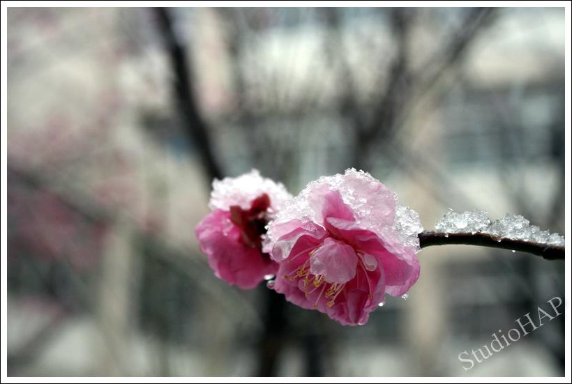 2011-02-14-1_0742.jpg