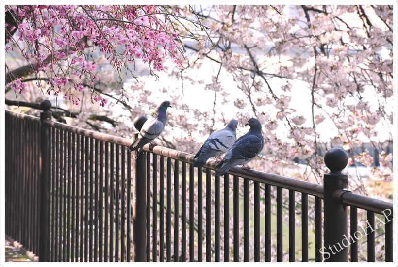 2011-04-23-1_0052.jpg