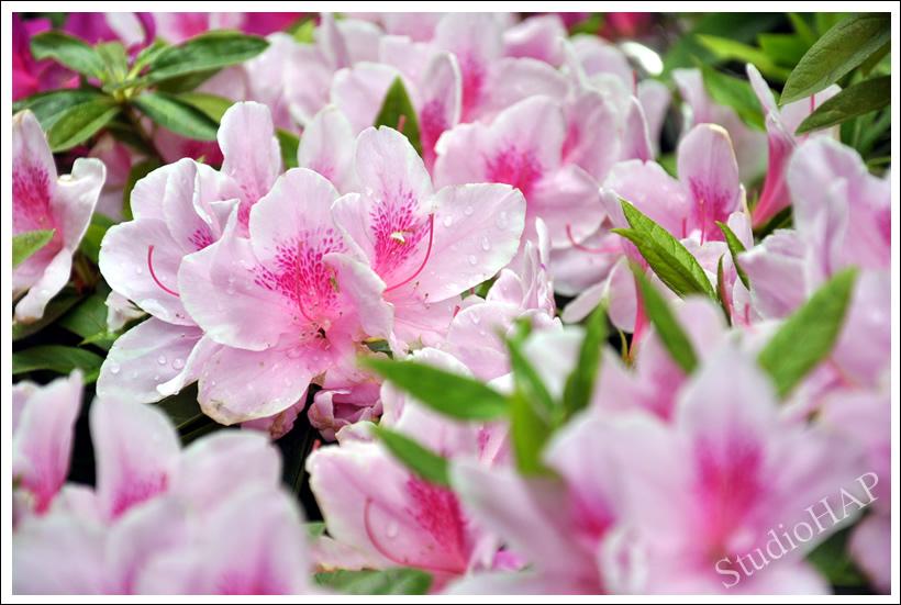 2011-05-07-1_1213.jpg