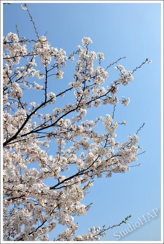 2011-05-10-1_0096.jpg