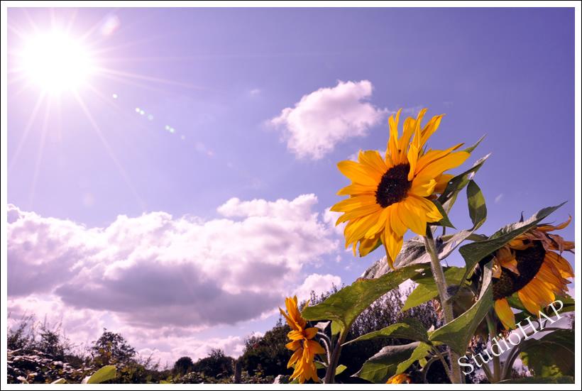 2011-07-13-1_2293.jpg