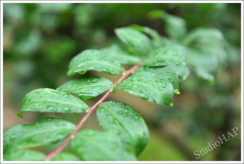 2011-09-17-1_5949.jpg