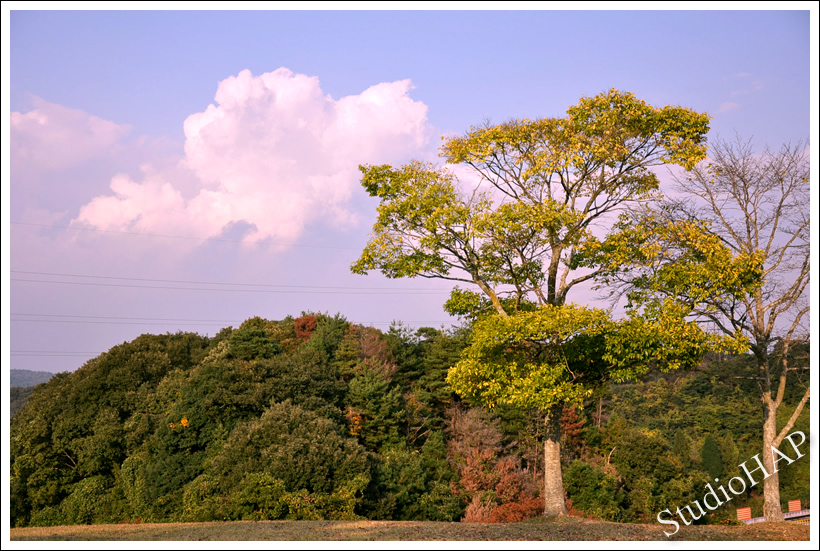 2011-11-13-1_7498.jpg