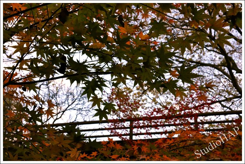 2011-11-24-1_3482.jpg