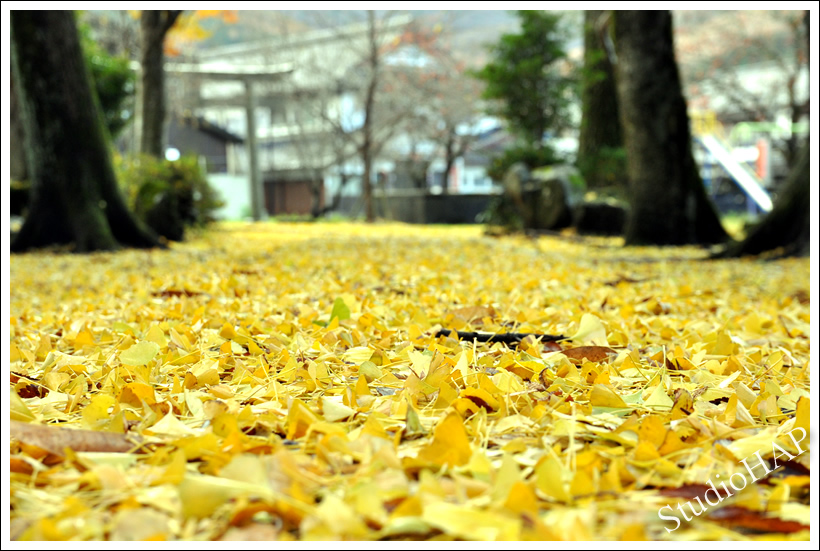 2011-12-08-1_7804.jpg