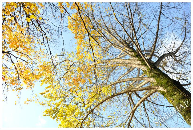 2011-12-27-1_7821.jpg