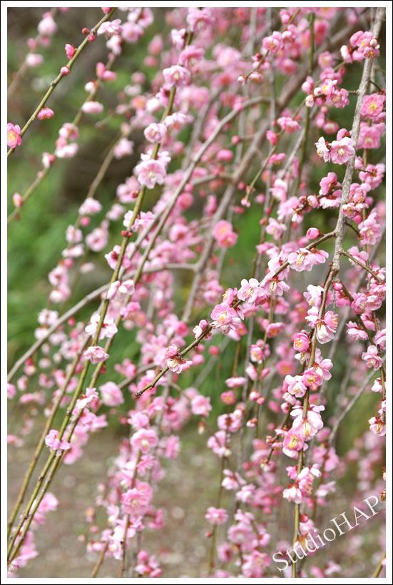 2012-03-03-1_0777.jpg