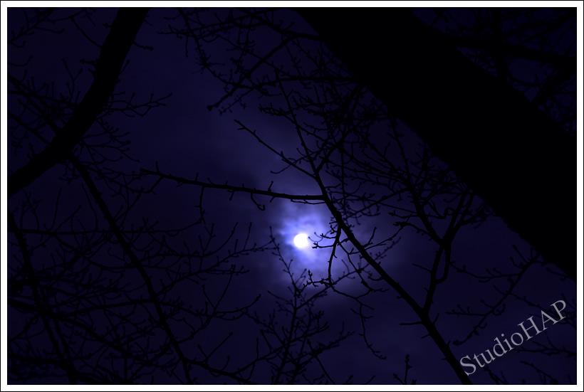 2012-03-09-1_0899.jpg