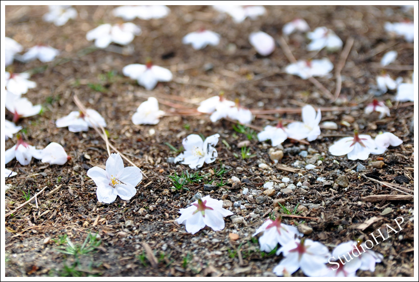 2012-04-12-1_1616.jpg