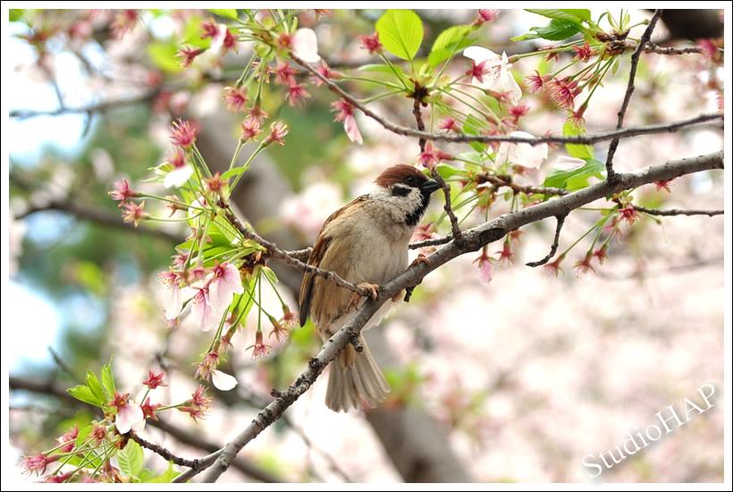 2012-04-14-1_1713.jpg