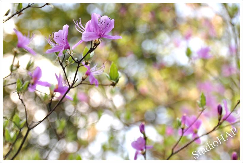 2012-04-26-1_2033.jpg