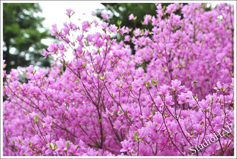 2012-05-09-1_2285.jpg