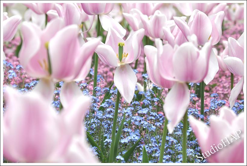 2012-05-25-1_0118.jpg