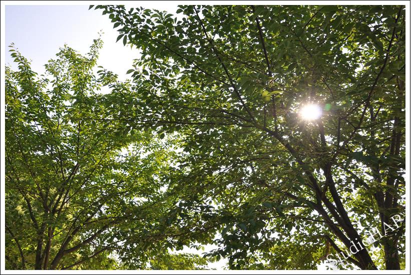 2012-05-27-1_2886.jpg