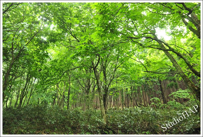 2012-06-11-1_3272.jpg