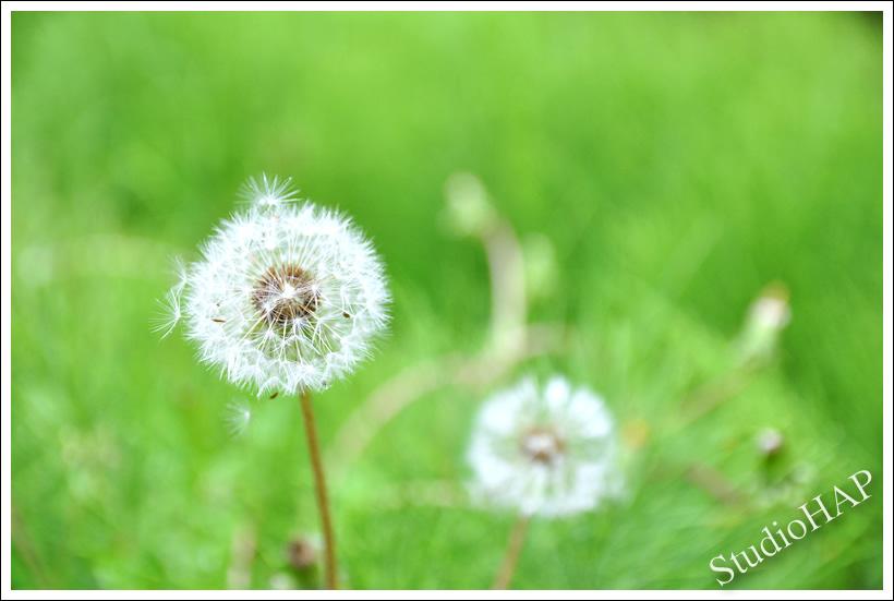 2012-06-12-1_3136.jpg