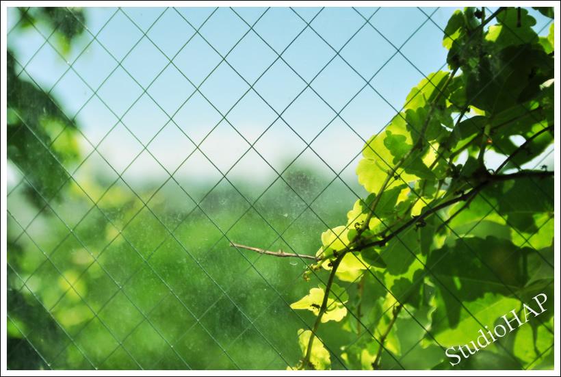2012-07-16-1_3768.jpg