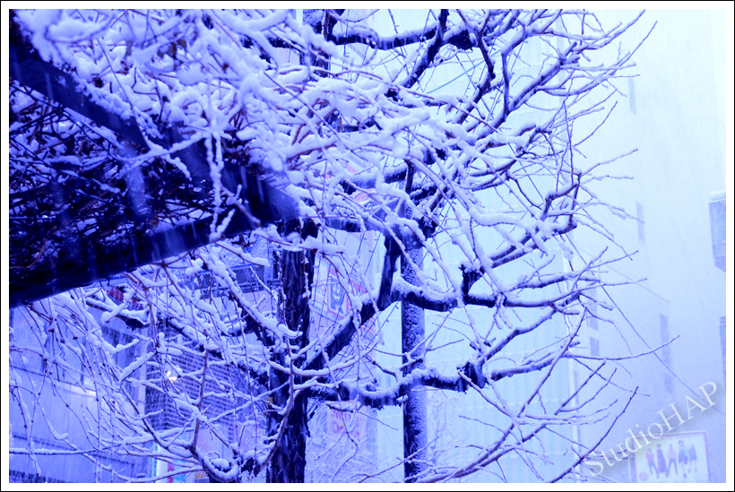 2013-01-27-1_3420.jpg