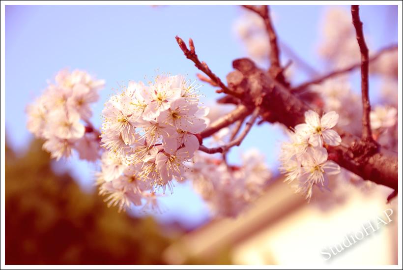 2013-03-09-1_3878.jpg