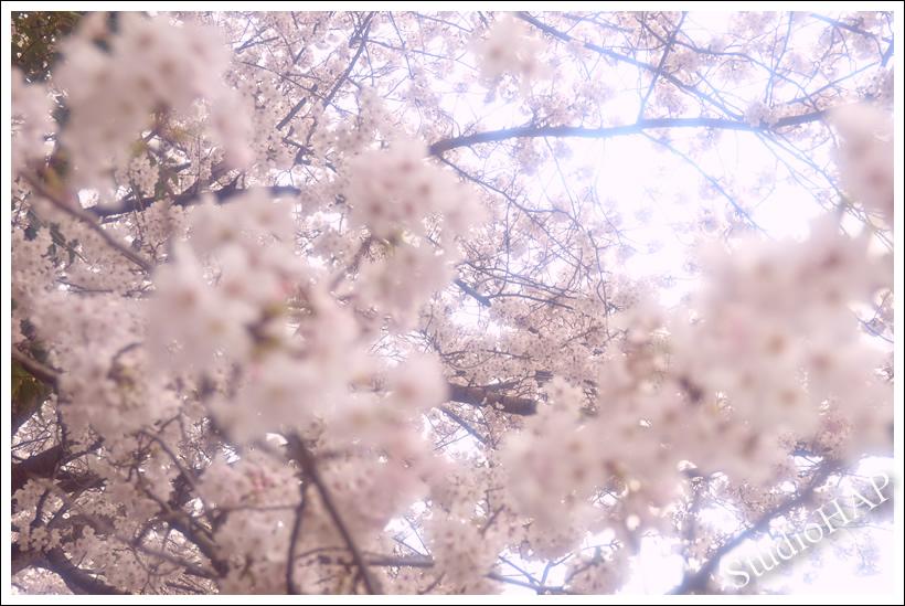 2013-04-02-1_4281.jpg