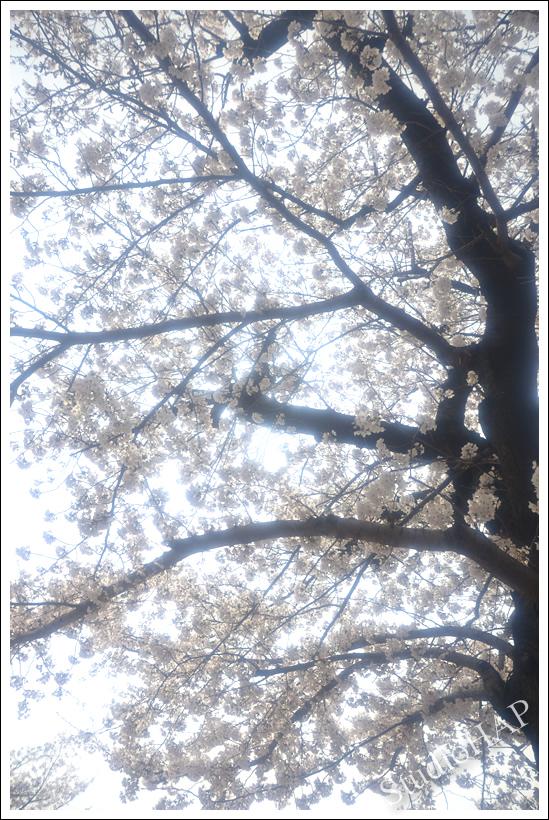 2014-04-04-1_4778.jpg
