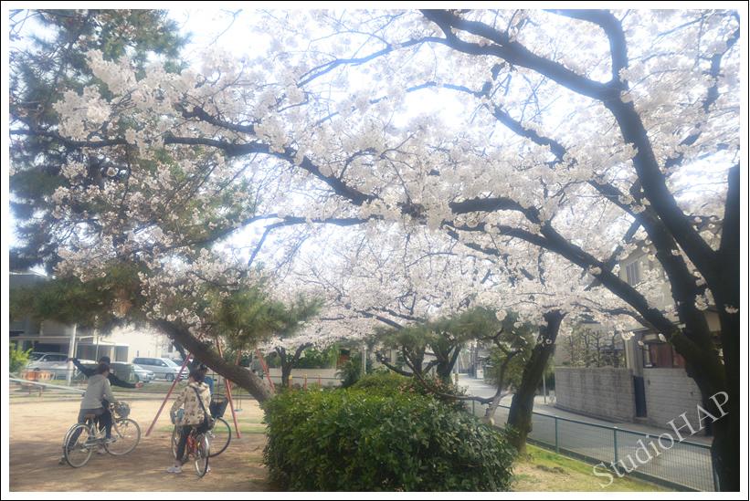 2014-04-08-1_4827.jpg